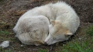14-slaedehund.jpg