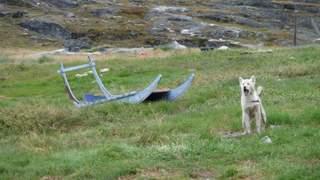 15-ung-slaedehund.jpg
